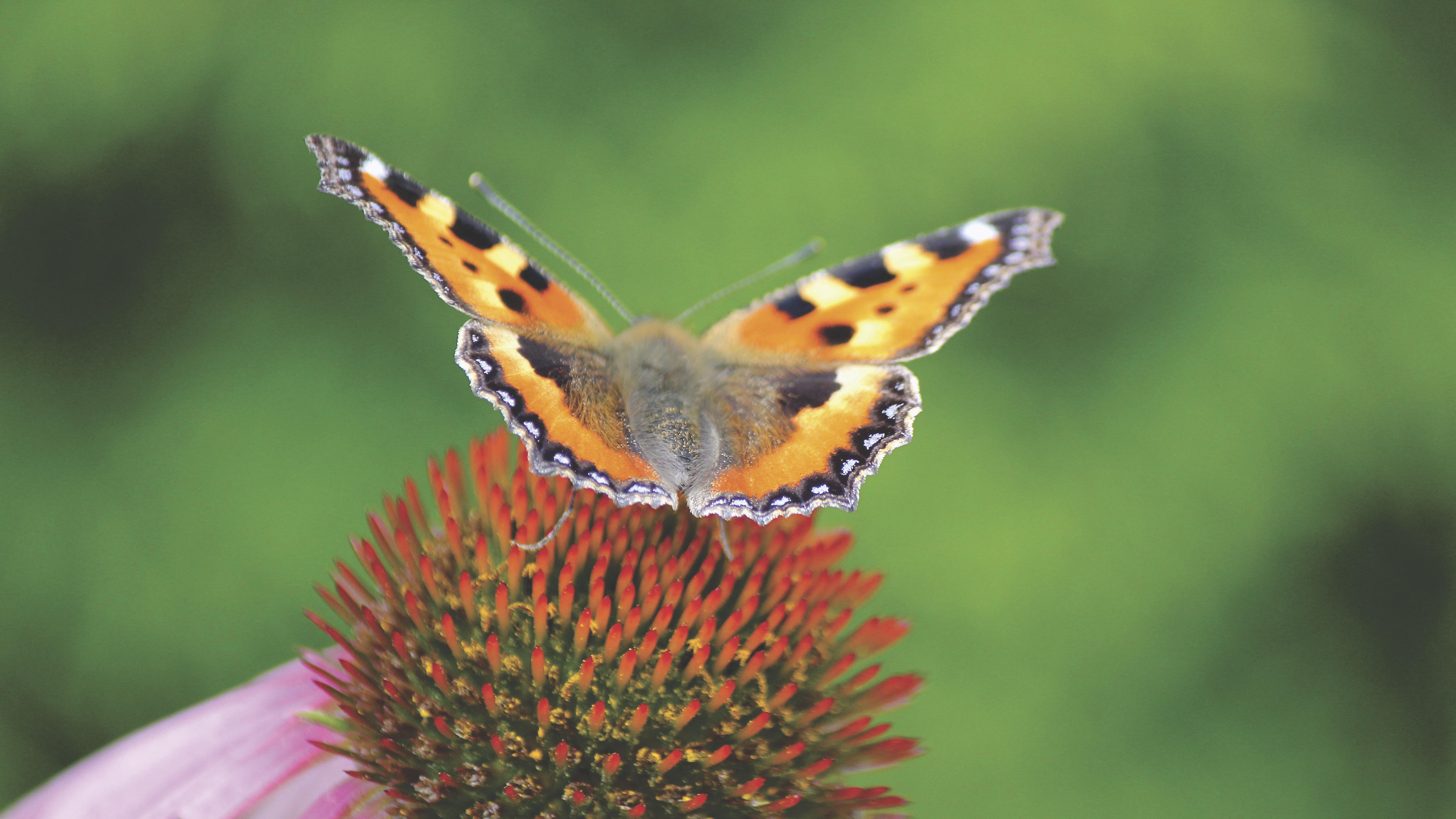 Effet papillon